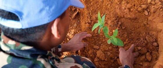 Un casco azul planta un árbol en el exterior de la sede de la Misión de la ONU en Sudán, en la localidad de El Fasher. Foto ONU/Albert Gonzalez Farran.