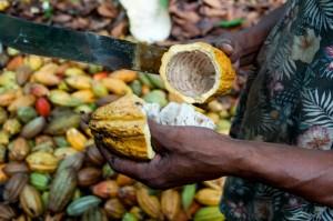 Muchos pequeños productores no tienen ni idea del valor de sus productos, por lo que venden su cacao a un precio de mercado inferior.