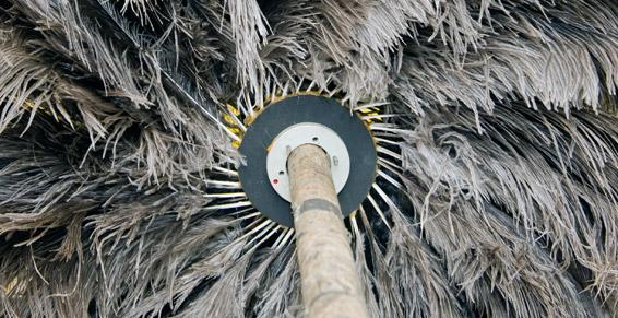 cepillo pluma avestruz